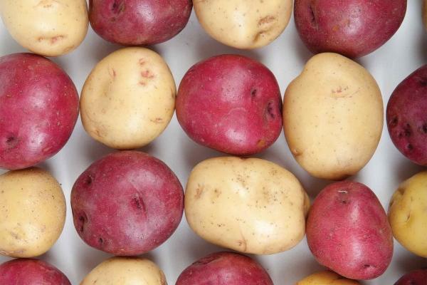 Organic Red or Yukon Gold Potatoes