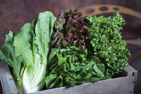 Romaine, Red leaf and Green Leaf Lettuce