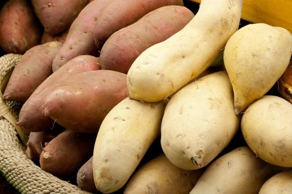 Jumbo Yams or Sweet Potatoes