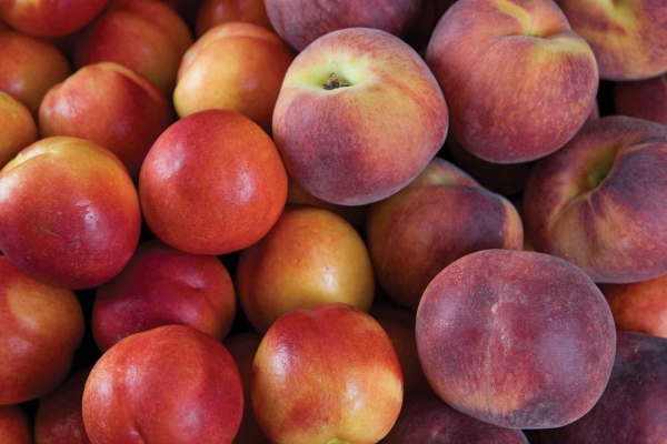 Organic Yellow Peaches or Nectarines