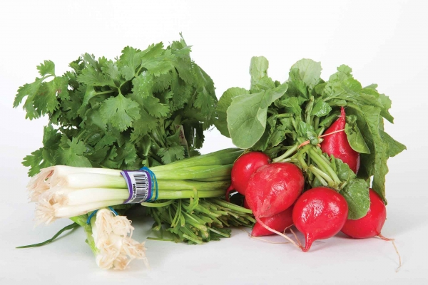 Cilantro, Green Onions or Radishes
