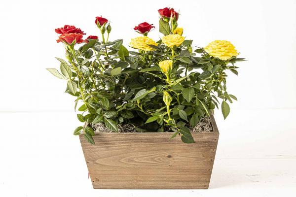 Roses in Wood Box