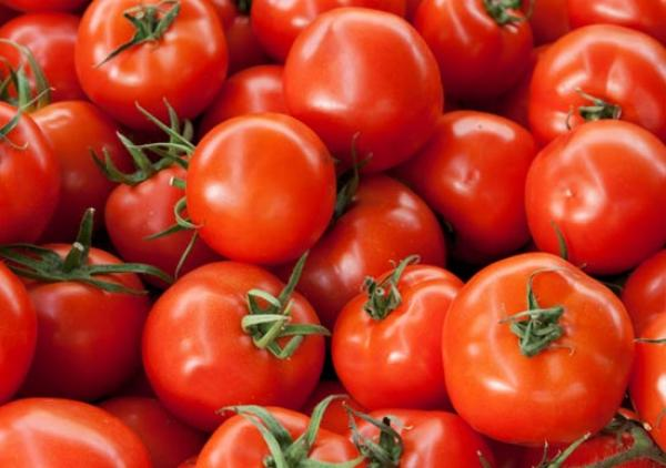 Organic Early Girl Tomatoes