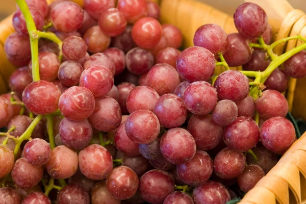 Red Holiday Seedless Grapes