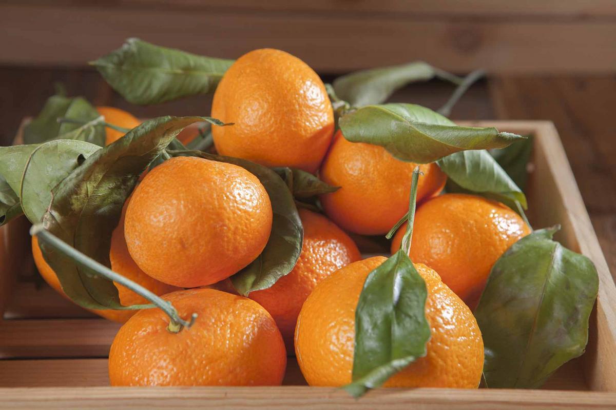Organic Stem and Leaf Satsuma Mandarins